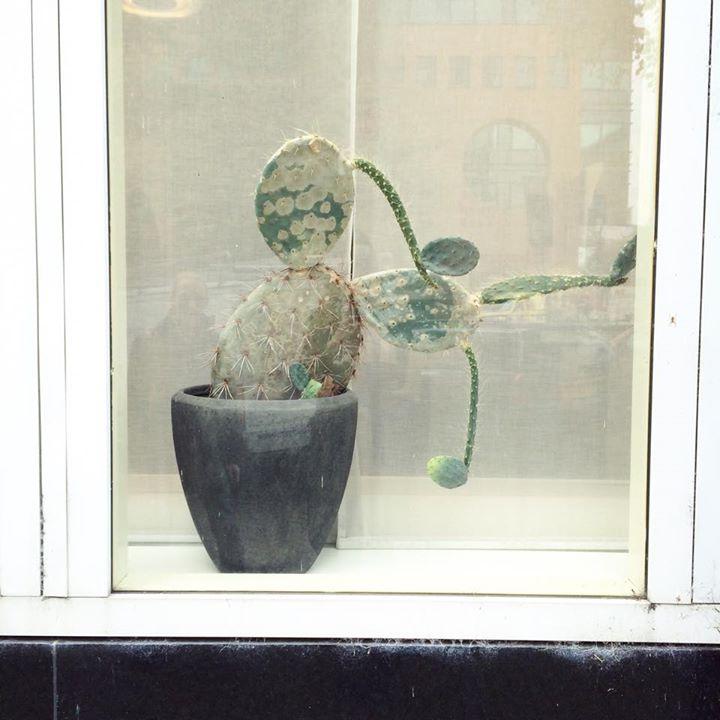 plantenasiel-diana-van-ewijk
