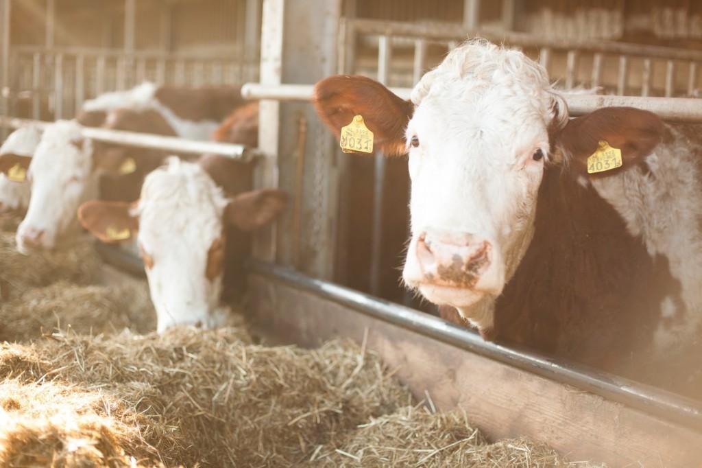 Vier van de dubbeldoeldames uit de stal van Hoeve Biesland. (foto: HoeveBiesland.nl)