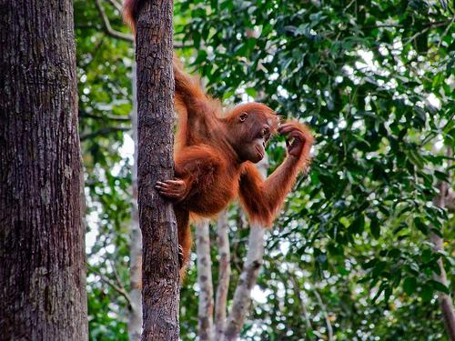 (beeld via EcoWalkTheTalk.com)