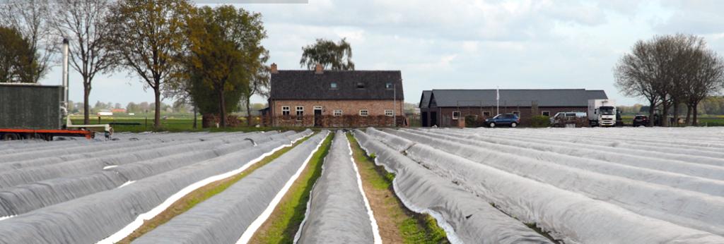 Asperge-kwekerij Van Beek in Terheijden, waar mijn asperges vandaan komen. Van lekker dichtbij dus, waardoor de kans op 'verhouten' kleiner is.