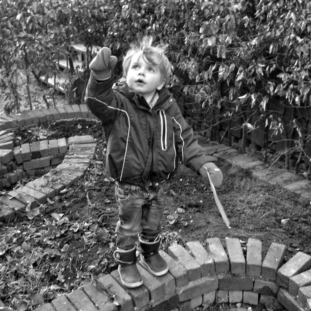 zelf rabarber kweken: ook leuk met kinderen