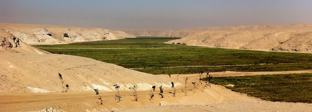 sekem-greening-the-desert