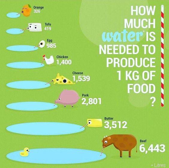 hoeveel-water-is-nodig-om-1-ei-te-produceren