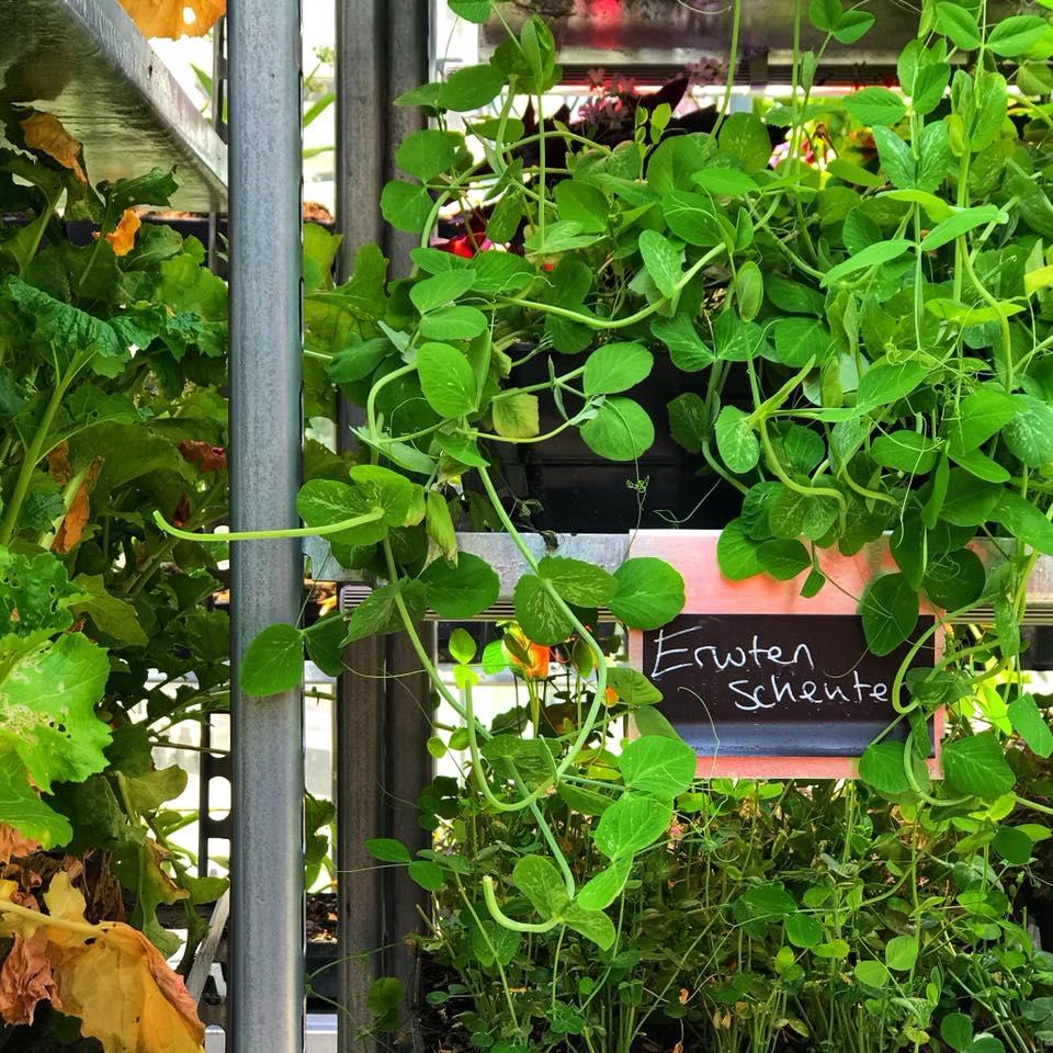 bugs-burger-insecten-eten-the-greenhouse-ecotarivist-diana-van-ewijk-rooftop-greenhouse